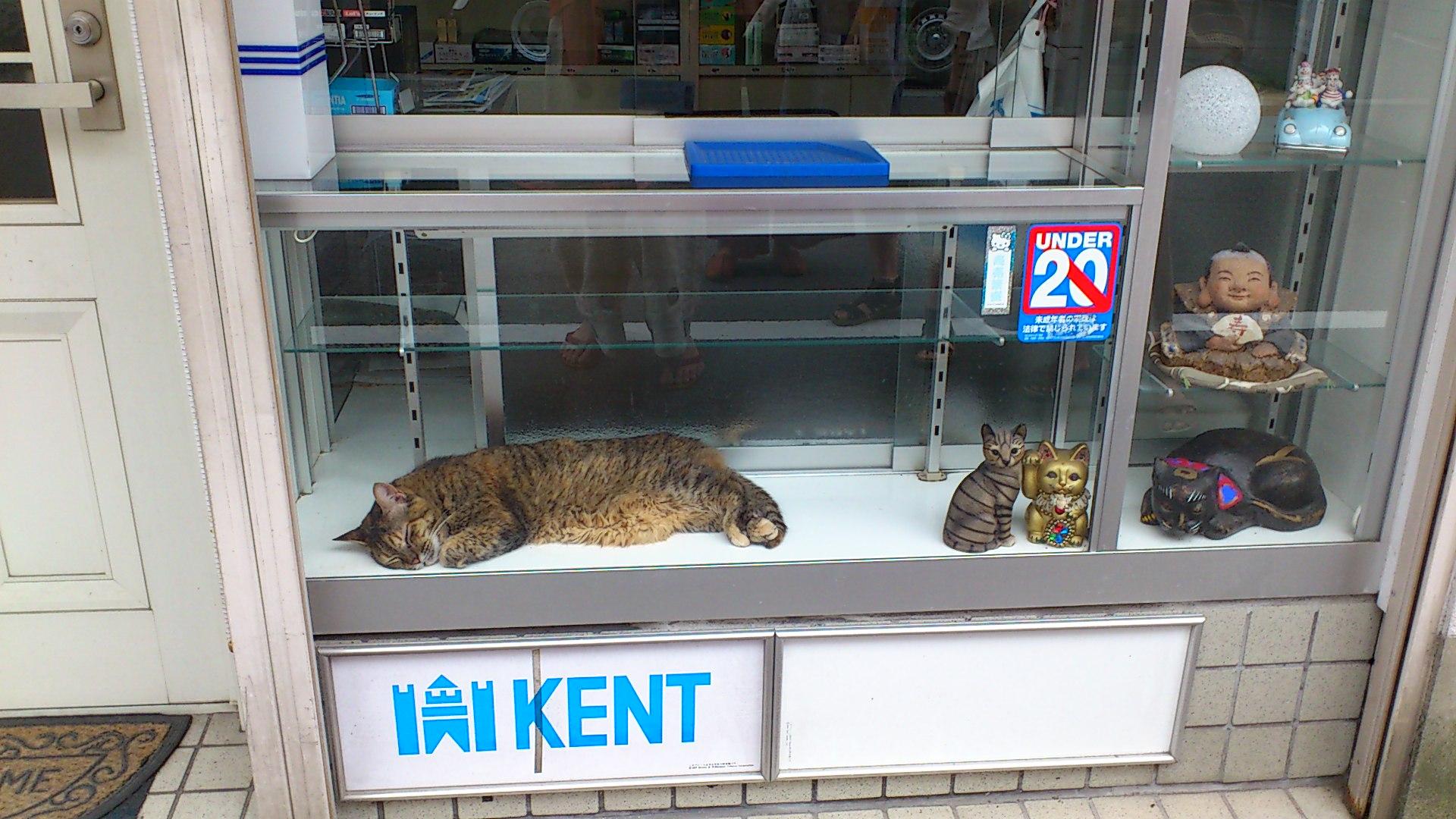 猫の昼寝@タバコ屋さんのショーケース